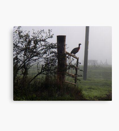 A Kentish Pheasant Canvas Print