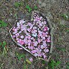flowers in heart shape by 64stops