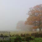 'Overnight Fog' by Stephen J  Dowdell