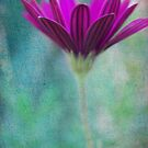 Purple flower by Kate Fortune