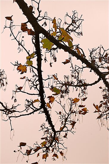 NoVember .. by Mike  Waldron