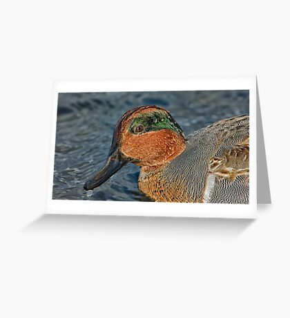 Profile of a wet green winged teal  Greeting Card