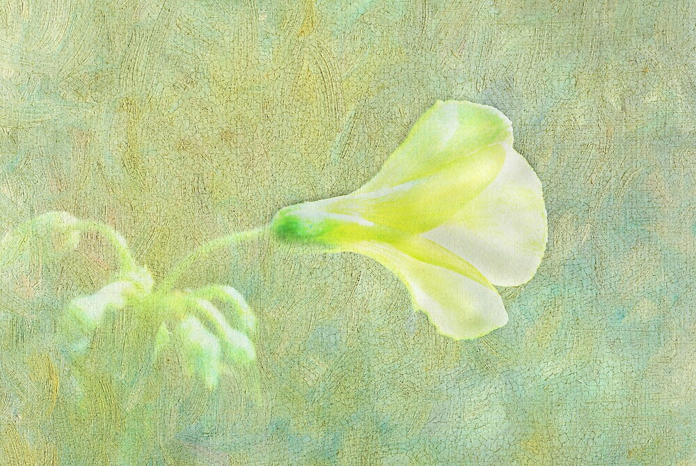 Yellow flower by Kate Fortune