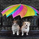 RAIN LOVERS... by Helen Akerstrom Photography