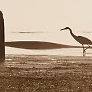 Heron Silhouette by Tracy Riddell