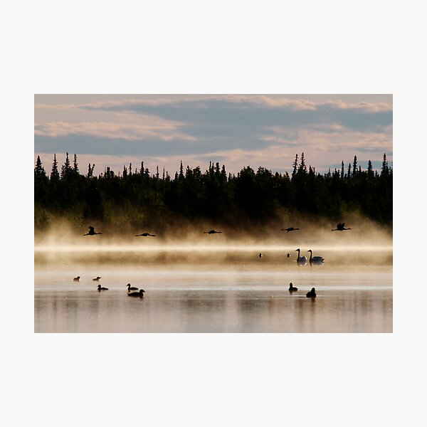 Birds in Paradise Photographic Print
