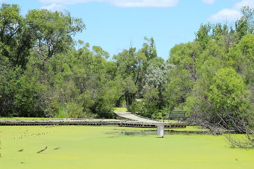 Floating Dock on a Marsh by rhamm