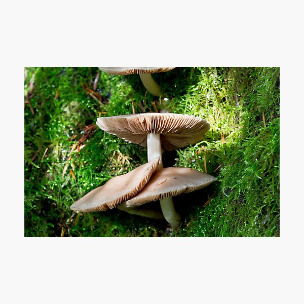 Mushrooms and Moss 3 Photographic Print