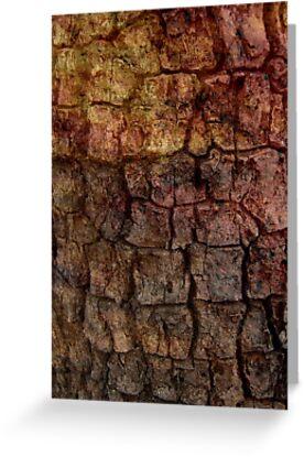 Rough Texture by Vanessa Barklay