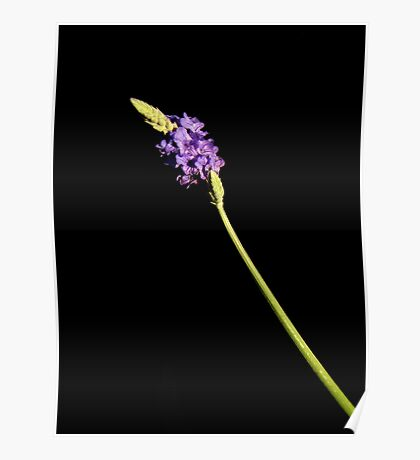 Black With A Hint Of Botanical Element ~ Part Five Poster