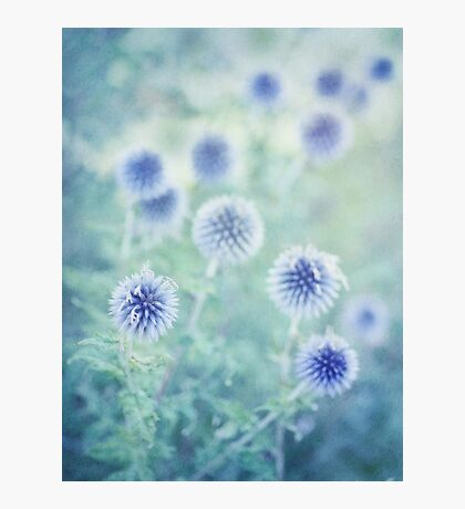 thistle dreams Photographic Print