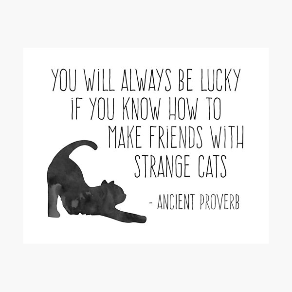 Friends with Strange Cats Photographic Print