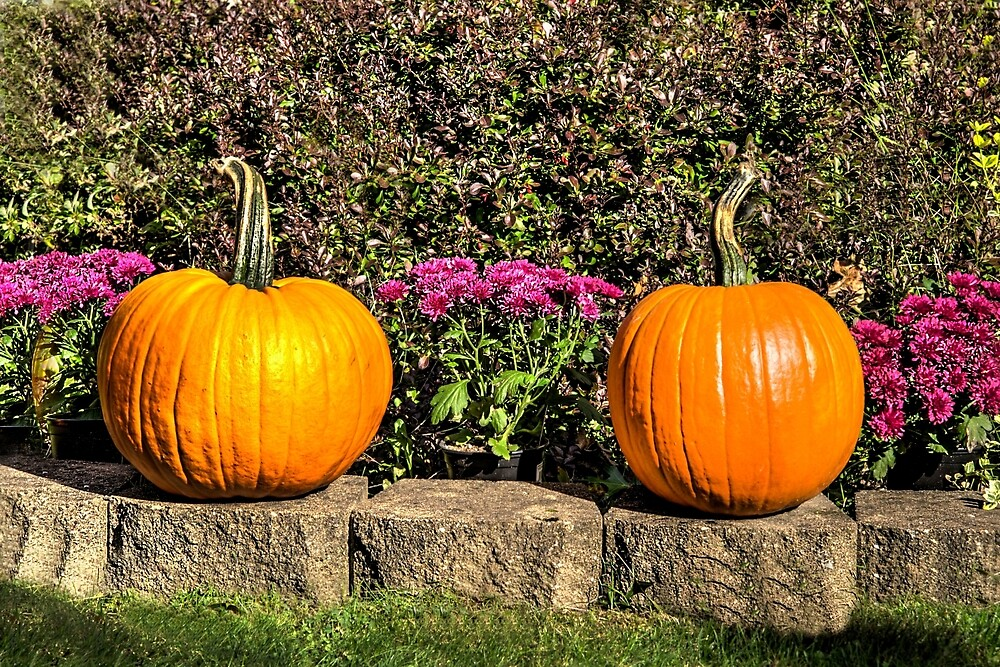 PUMPKIN DUO by Paul Drushler