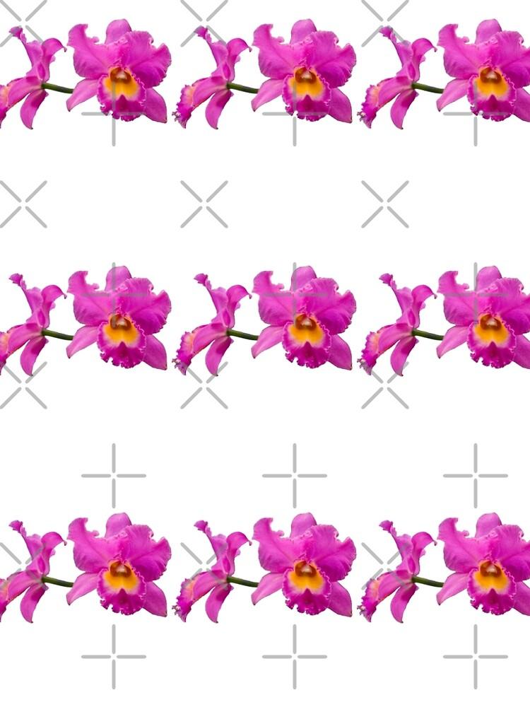 Orchids #3 by photorolandi