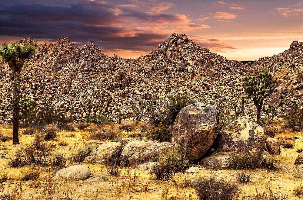 Scenic view at Joshua Tree National Park by Froggie