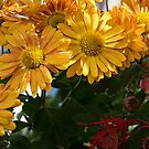 Mums of Gold by Greg German