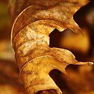 Gold Leaf by Kelly Chiara