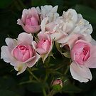 Cluster of Mini Pink and White Roses by Gerda Grice