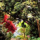 An Open Garden by Eve Parry