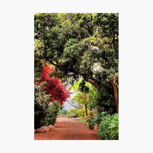 An Open Garden Photographic Print