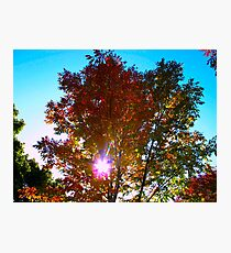 Autumn levity Photographic Print