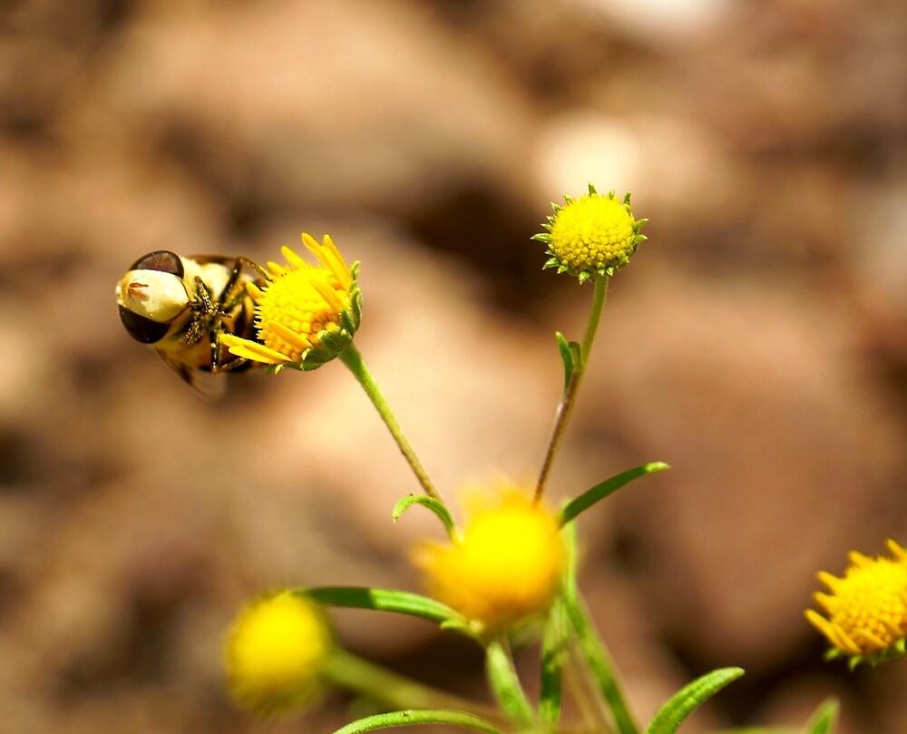 Honey Bee by Gina Dazzo