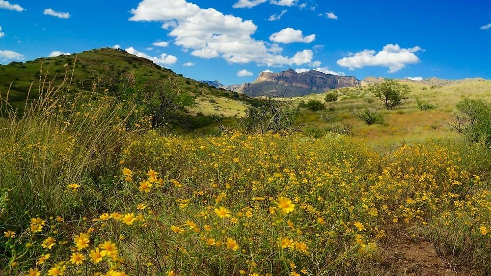 Muleshoe Ranch by Gina Dazzo