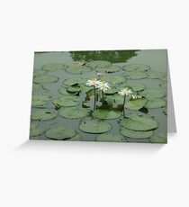 A graceful water ballet Greeting Card