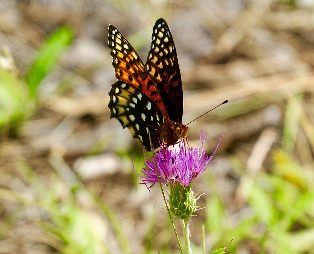 Butterfly Love by Gina Dazzo