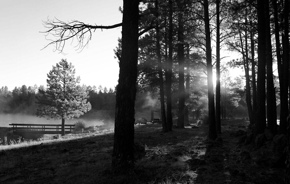 Morning Sunshine by Gina Dazzo