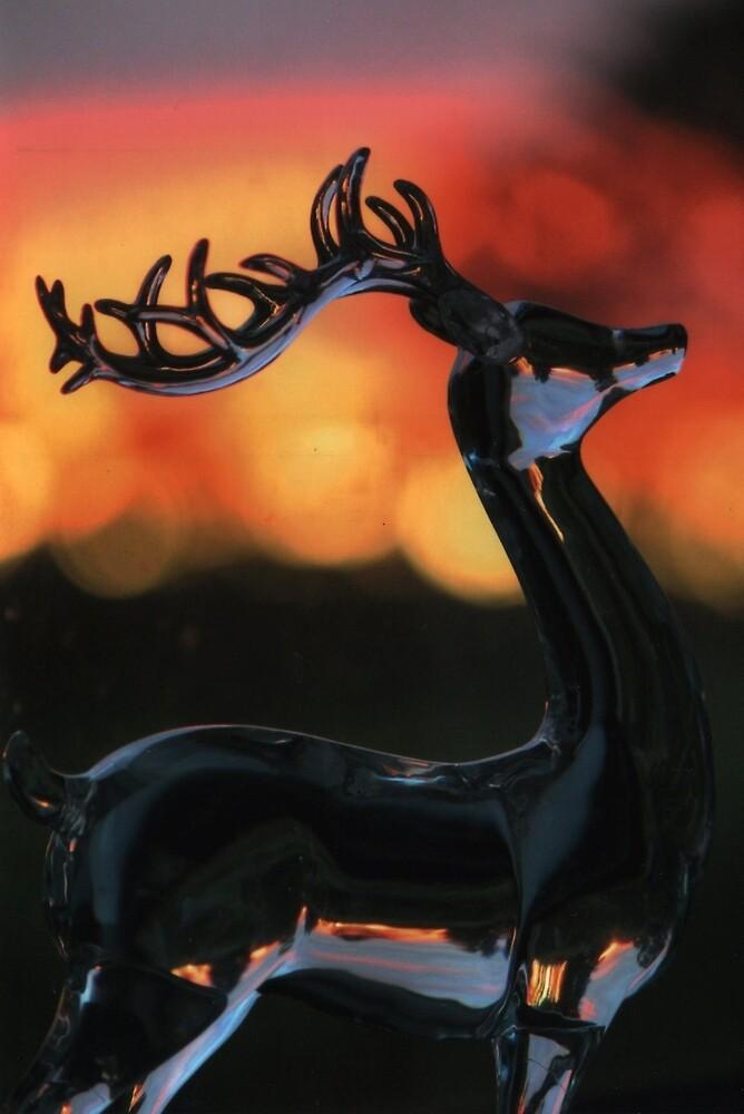 deer by Rebecca O'Toole