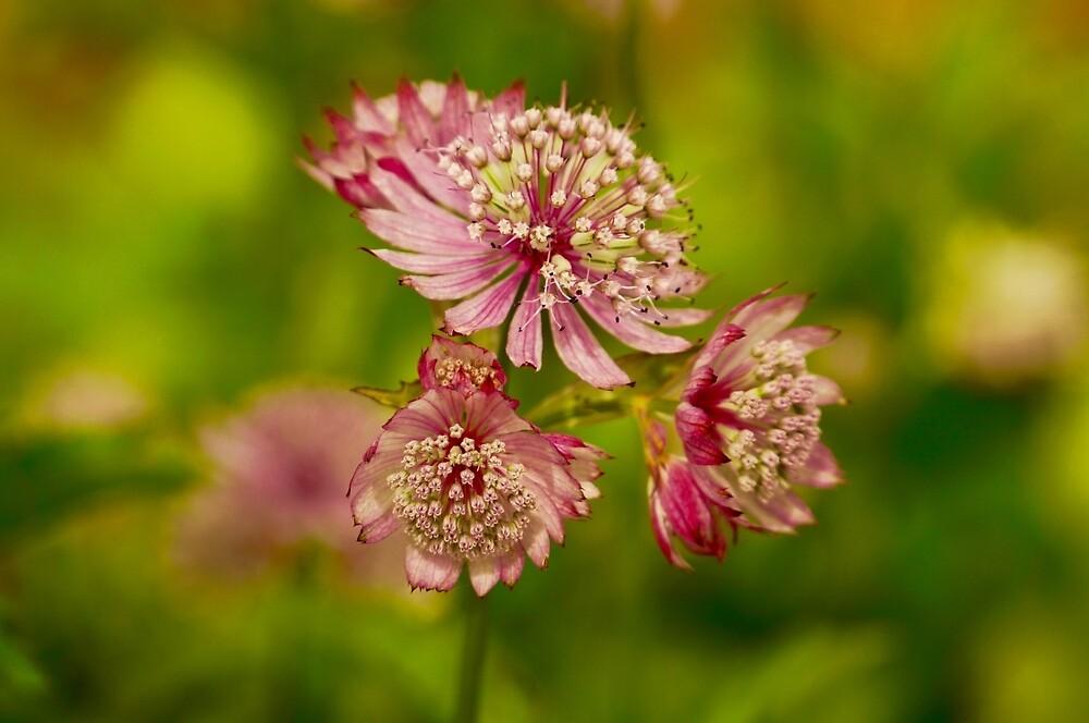 Pretty In Pink by Gina Dazzo