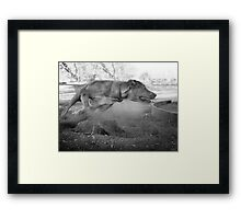 Dogs with game face on .33 Framed Print