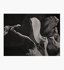 Study From a Deer Skull - Occipital Photographic Print