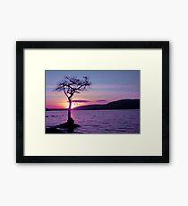 Don't let the Sun go down on Tree. Framed Print