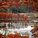 Fall Colors 4020 by Zohar Lindenbaum