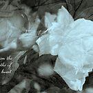 Love's Encouragement by Lozzar Flowers & Art