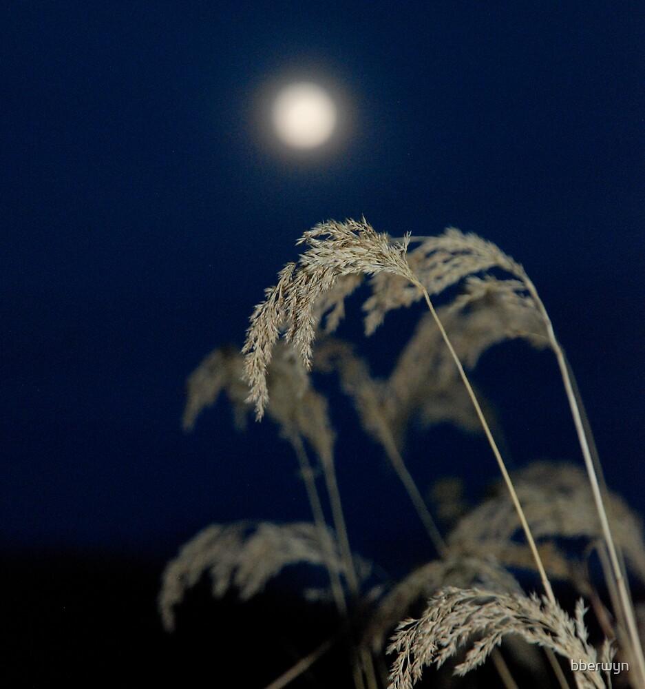 November moonrise. by bberwyn
