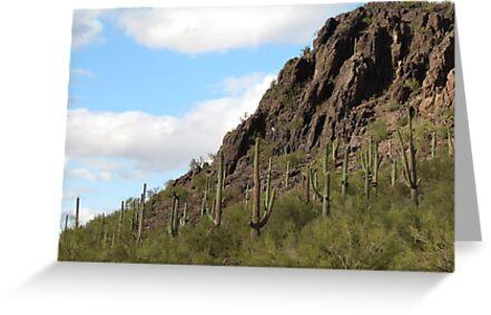 Mother Nature in Marana,AZ by Kimberly Chadwick