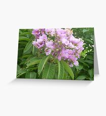 An magnificent pink bouquet Greeting Card