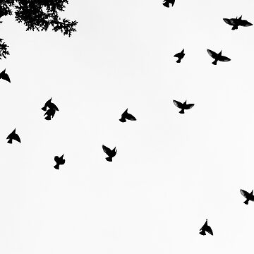 The Birds by mpaev