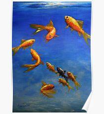 Feng Shui Fish Poster