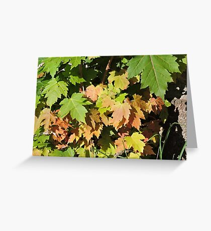Autumn Leaves (Twycross) Greeting Card