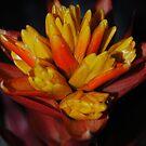 Bromeliad (Tropical Plant) by Jonice