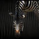 Stripes on Stripes by swaby
