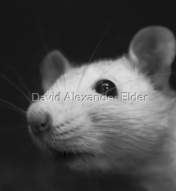 Stuart Smells Something by David Alexander Elder