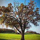 Another tree in Autumn, Somerset, UK by David Carton