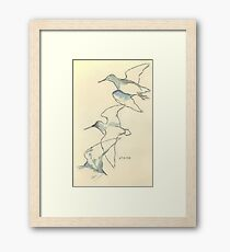 Sketching birds Framed Print