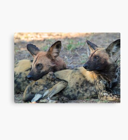 We are watching over our pack! Canvas Print