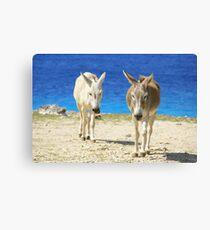 Bonaire donkeys Canvas Print